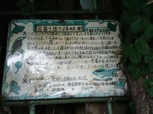 愛宕神社の大銀杏