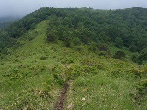 美ヶ原トレイルランアンドウォーク 殿城山先