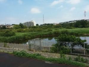 長津川調整池