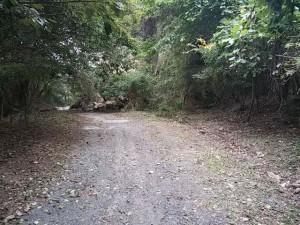 鋸山への林道