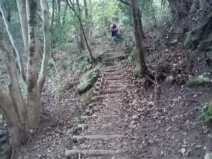 鋸山トレイル