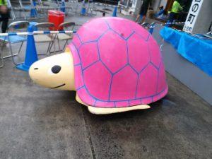 turtle37