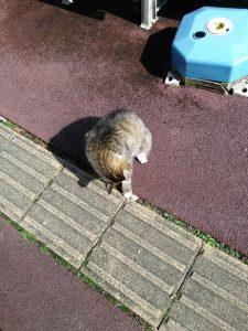 屋久島の人懐こい猫