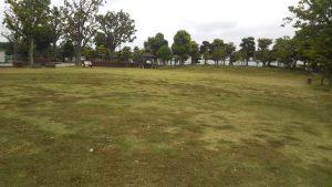 中山競馬場の公園